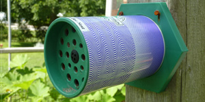 Mason Bee Nest in the Garden